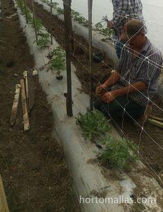 Instalacion de HORTOMALLAS en un tunel para protección de heladas Firewood, Crafts, Grow Tomatoes, Harvest, Trellis, Mesh, Vegetable Garden, Woodburning, Manualidades
