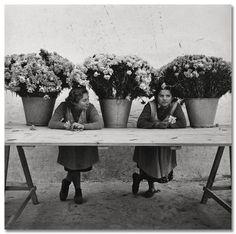 Francesc Català Roca :: Floristas at Las Ramblas, Barcelona, 1950