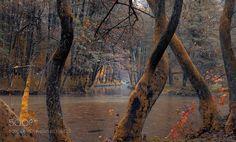 Trees by SejmenovicMevludin