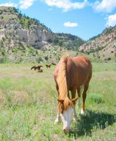 Things to Do in South Dakota's Black Hills and Badlands   Midwest Living Wild Horse Sanctuary