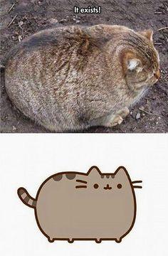 Pusheen Cat Exists.