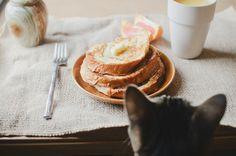 猫とパンケーキ。
