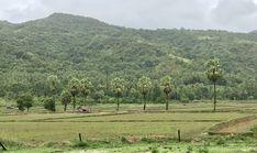 Dawei during rainy season. Love this place! Myanmar Travel, Mergui Archipelago, Burmese Food, Rainy Season, Plan Your Trip, Travel Essentials, Palm Trees, Southern