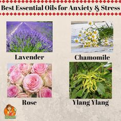 According to a research, adding any of these essential oils to sweet almond oil in a 1:4 mixture and massaging helps in relieving stress and depression.