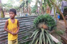 Giant Pineapple Scares the Villagers in Tacloban
