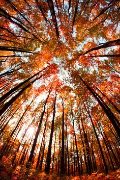 autumn-maple:  Bottom Up Fall