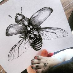 ...🐾...  #szarvasbogár #dotwork #dots #dotworktattoo #dotworker #blackandwhite #bug #frenchpuppy #puppypaws #drawing #draw #mik #hungary🇭🇺 #nature #flyingbug Dot Work, Hungary, Dots, Drawing, Nature, Stitches, Naturaleza, The Dot, Drawings