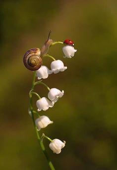 the snail and the ladybug (fleur de muguet) Beautiful Bugs, Amazing Nature, Beautiful Flowers, Beautiful Pictures, Nature Animals, Animals And Pets, Cute Animals, Beautiful Creatures, Animals Beautiful