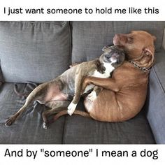 Happy Hump Day. #pitbullmemes Animals And Pets, Baby Animals, Funny Animals, Cute Animals, Cute Puppies, Cute Dogs, Amstaff Terrier, Dog Shaming, Mundo Animal