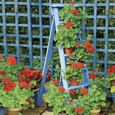Great way re-purpose an old ladder
