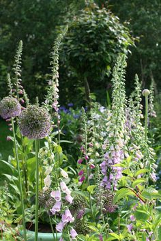 Roses and Patina: Foxgloves have party in the garden!