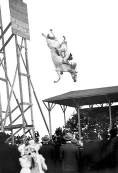 Eunice Padfield and her horse thrill the holiday crowd as they plunge from a high platform into a pool of water below, Pueblo, Colorado, July Get premium, high resolution news photos at Getty Images Horse Diving, Sea Diving, Funny Animal Pictures, Cool Pictures, Vintage Photography, Nature Photography, Horse Posters, Thing 1, Photos Of The Week
