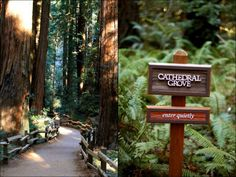 Iconic Muir Woods is must-visit for all Californians. Here's our insiders' guide on making the most of your trip.