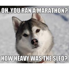 The dog has a point #Dog #dogsofinstagram #dogs #dogstagram #Run #Runner #RunningBuddy #runnerhumor #Tgif