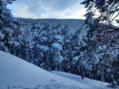 Viviendo la Montaña: Esquiando el bosque norte de Siete Picos. Paisaje ...