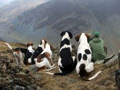 The beautiful Blencathra hounds