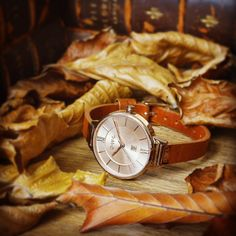 Beautiful weekend loving all the autumn colours everywhere. Inspirational. #fashion #watchesofinstagram #fblogger #watches #autumn #tan #gold #insperation #bblogger - Shop now for owlgreatbritain > http://ift.tt/1Ja6lvu