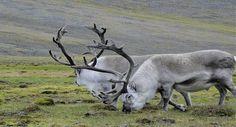 Svalbard: El lugar más al norte del mundo habitado.