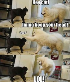 Hey cat!  - funny pictures #funnypictures