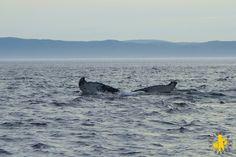 2013.08 Québec Tadoussac Croisière baleine