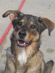 LADY  IS ON DEATH ROW TONIGHT! PLEASE SHARE! An adoptable German Shepherd Dog Dog in Brooklyn, NY.  ...