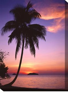 Sunset Beach Outdoor Canvas Art Our Sunset Beach Outdoor Canvas Art features a beautiful picture of a palm tree in a stunning and colorful sunset. Create your own oasis with our stunning, vibrant and