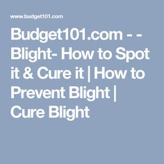 Budget101.com - - Blight- How to Spot it & Cure it | How to Prevent Blight | Cure Blight