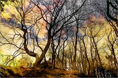 Im Zauberwald III Poster von Pirmin Nohr baum bizarr bäume fantasie fels himmel märchenhaft natur wald wolken Bäume & Sträucher Komplette Kolorierung tree bizarre trees fantasy rock sky nature forest clouds colored