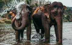A trip to MandaLao elephant retreat. Is this the most responsible; a different experience to visiting a typical elephant camp in Laos or Thailand. Elephant Camp, Asian Elephant, Elephant Love, Baby Elephants, Giraffes, Best Places To Travel, Places To Go, Mandalas Painting, Animales