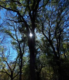 Sunshine in the trees