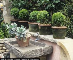 I'm going to be ready to jump on it when the truck pulls into Home Depot filled with boxwoods and evergreens. Remember last year, I foun...
