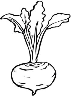 Beetroot 7 coloring page from Beets category. Select from 26736 printable crafts of cartoons, nature, animals, Bible and many more. Vegetable Coloring Pages, Fruit Coloring Pages, Colouring Pages, Coloring Books, Coloring For Kids Free, Super Coloring Pages, Free Printable Coloring Pages, Art Drawings For Kids, Colorful Drawings