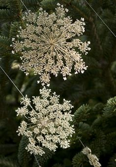 queen annes lace decorations  / green and cream