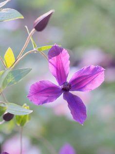 chippiさんが投稿した画像です。他のchippiさんの画像も見てませんか?|おすすめの観葉植物や花の名前、ガーデニング雑貨が見つかる!GreenSnap(グリーンスナップ)