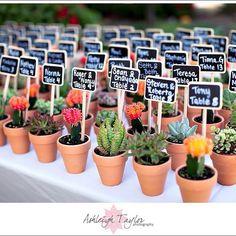 Santa Barbara Historical Museum Wedding by Ashleigh Taylor Photography + La Fete Weddings Mini Cactus, Cactus Flower, Flower Bookey, Flower Film, Flower Pots, Diy Wedding, Rustic Wedding, Wedding Summer, Wedding Cake