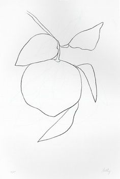 line drawing. the style skinny Simple Illustration, Botanical Illustration, Botanical Art, Wal Art, Ellsworth Kelly, Background Drawing, Art Archive, Graphic Design Typography, Graphic Art