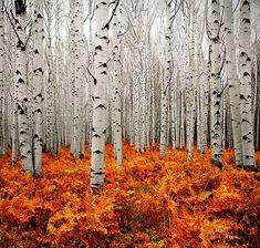 Estas 100 fotografías de otoño te inspiraran a tomar tu cámara y explorar la naturaleza