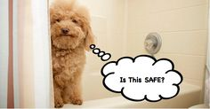 Is Your Natural Dog Shampoo Safe?