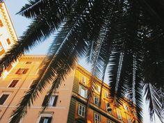 """61 Synes godt om, 2 kommentarer – Julie (@photo.julle) på Instagram: """"Ciao bella♡ • • #summer #instagood #Sunny #palmtrees #nature #city #travel #bluesky"""""""