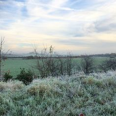 How cold is here? Can we judge the crispness of the grasses for the weather? #landscape #cold #grasses #sky #trees #bushes #morning #sunrise #nature #england