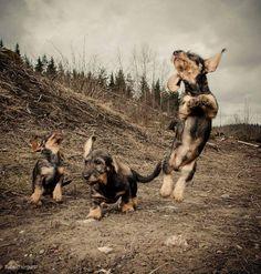 Happy puppies.