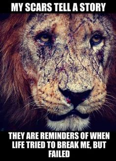 Lion quotes - So My last dump went viral, ppl said moar and thnx so i hope you find something good in here for your needs Motivacional Quotes, Lion Quotes, Wolf Quotes, Quotable Quotes, Wisdom Quotes, Great Quotes, Qoutes, Quotes With Lions, Tiger Quotes