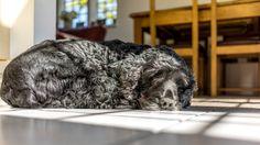 Casper Sleeping -