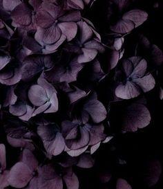 "chasingrainbowsforever: ""Colors ~ Aubergine """