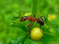 Ant by Christian Gschwend Photography on 500px