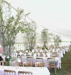 silver birch marquee - Google Search