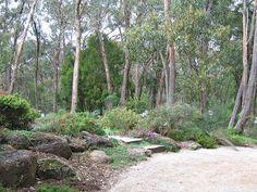 Garden leading into the bush Garden leading into the bush