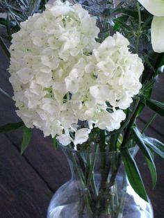 Reinvigorating Cut Hydrangeas - Love and Bellinis