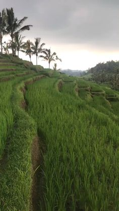 Top 10 Things To See & Do In North Bali: Wander the vast rice valleys of Jatiluwih, Bali's first UNESCO World Heritage Site The northern region of Bali boasts hidden gems such as enormous waterfalls, vast rice fields, spiritual water temples, steamin Bali Travel, Travel Abroad, Best Of Bali, Places To Travel, Places To Visit, Water Temple, Nature Photography, Travel Photography, Travel Nursery
