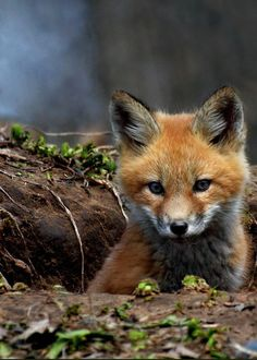 If God Made Foxes, then why do people illegally kill them, make coats, necklaces, and even blankets!!!! I hate to see these amazing Loving creatures die!!!! STOP KILLING THEM!!!!